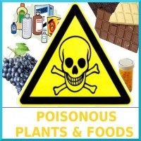 01-Poisonous_Plants__Foods_-_box