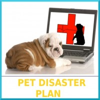 02-Pet_Disaster_Plan